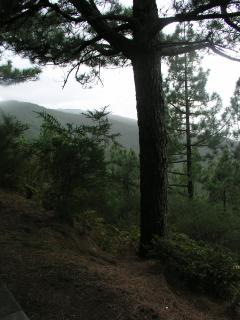 Primeval Forest on Tenerife