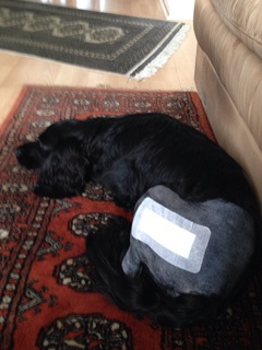 vader-after-surgery